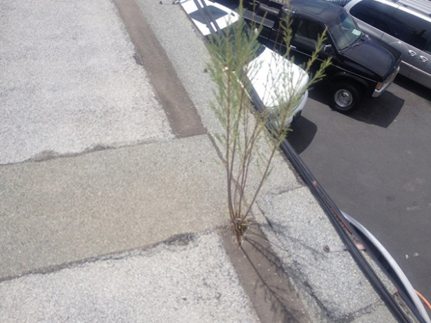 plant growing on roof