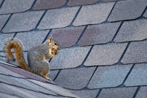 Can You Experience Roof Damage from Animals