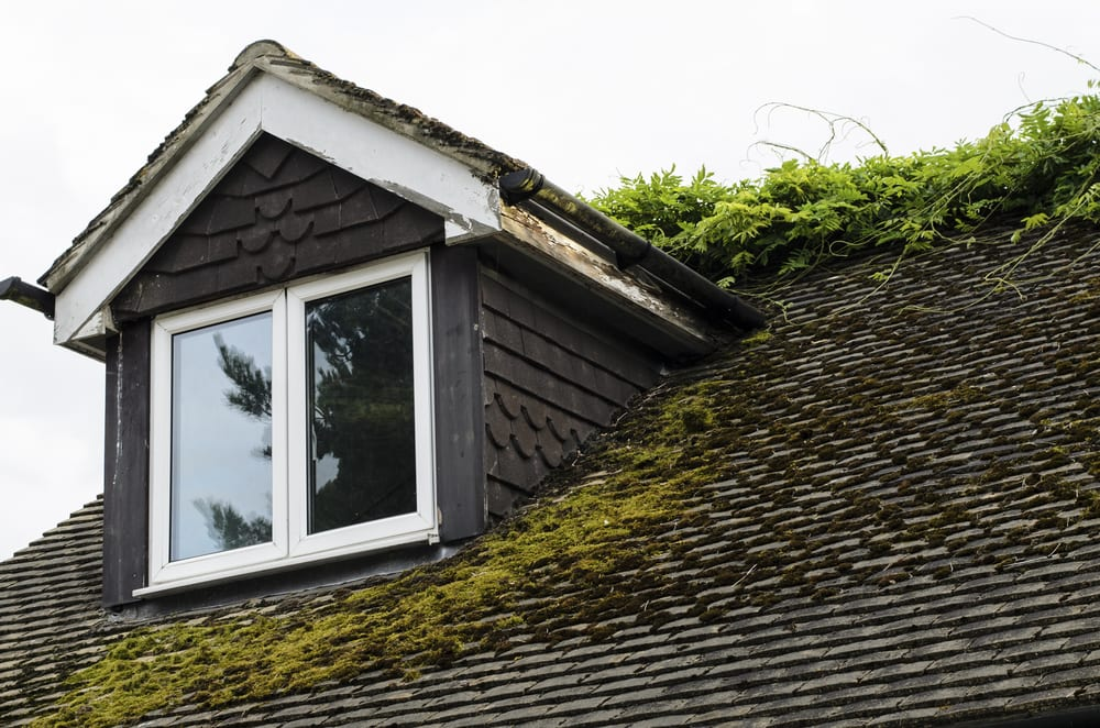 How To Prevent Moss From Growing On Your Roof Roof Doctor